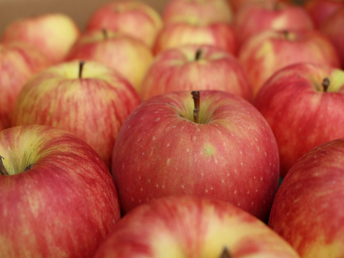 秋イベント|森の湯-りんごの湯