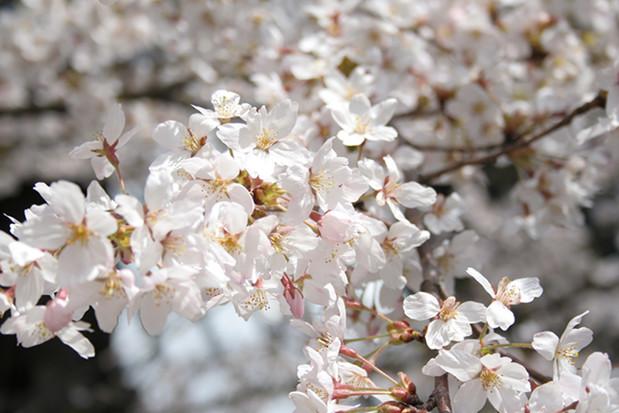 箱根小涌園ユネッサンの春 2018 Spring